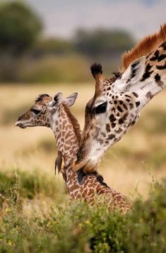 A mothers love ~
