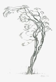 Tree Dancer 03 13x19 by ~kramus on deviantART - Earth and Dancing - a twofur