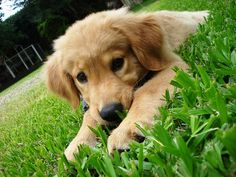 it's so verry cute baby dog