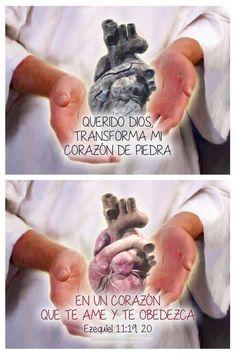 Querido Dios, transforma mi corazón de piedra en un corazón que te ame y te obedezca.  Ez 11.19-20