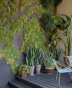 @Kalee Hughes Dankner how do you feel about this vertical gardening ive been hearing about?i like the moss.