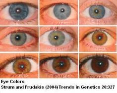 This science fair project idea examines eye color genetics and the role it plays in eye color inheritance. Science Biology, Teaching Biology, Science Education, Science Activities, Life Science, Ap Biology, Eye Color Chart Genetics, Rare Eye Colors, Biology Classroom