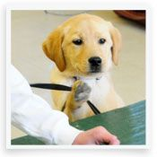 20 Dog Commands You Need to Know | Dog Training | PetCareRx