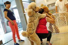 Невероятная стрижка животных  Новое на сайте!В Тайване есть один необычный зоомагазин в котором работает салон по стрижке животных. Тайваньский парикмахер по имени Ли Мей-чен (Lee Mei-chen) принимает своих четвероногих посетителей, собак и кошек, для того, чтобы сделать им невероятные и неповторимые стрижки. В эти летние дни от жары и зноя особенно сильно страдают наши пушистые четвероногие друзья. И во избежание ...The post Невероятная стрижка животных appeared first on Креативный мир в…