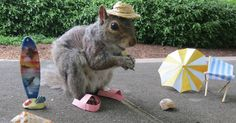 Student Befriends Squirrels On Campus And Dresses Them In Cute Costumes | Bored Panda  http://www.boredpanda.com/costume-squirrel-whisperer-sneezy-nary-krupa/?utm_source=newsletter&utm_medium=link&utm_campaign=Newsletter