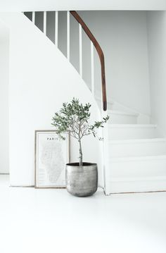 All white with a hint of natural by way of a beautiful handrail. Love an olive tree too. Calming.