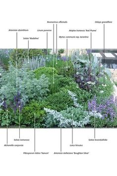 Border with blue purple flowers and plants with silver foliage .-Bordüre mit blau lila Blüten und Pflanzen mit silbernem Laub von Border with blue purple flowers and plants with silver foliage from - Garden Cottage, Garden Beds, Garden Sofa, Garden Design Plans, Garden Borders, Garden Edging, Garden Path, Easy Garden, Herb Garden