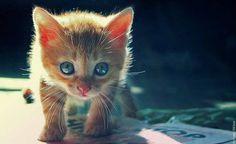 Kenya Williams: Cute Kitty #Lockerz