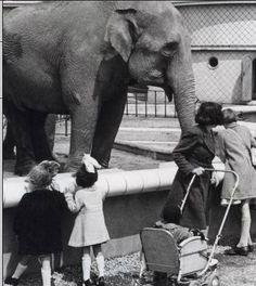 Diergaarde Blijdorp, De nieuwe olifant Nellie trekt veel bekijks van de kinderen, Rotterdam 26 mei 1941.