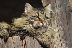 Cat .JPG 8