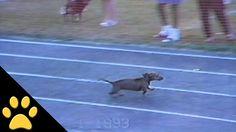 Σκύλος κλέβει με απίστευτο τρόπο για να κερδίσει αγώνα δρόμου (Video)