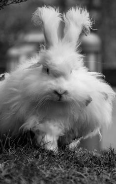 Just a quick post before the Easter weekend begins to wish you all a happy Easter! Animals And Pets, Funny Animals, Cute Animals, Animal Kingdom, Easter Bunny, Creatures, Fluffy Bunny, Fun List, Peter Cottontail
