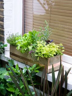 Make a Windowbox of Herbs and Lettuce