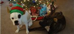 8 Ways to Help Your Dog Survive Holiday Visits | Dogster