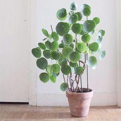 <p>Ibland är det enkla det vackraste. Låt den gröna växten sätta stilen i rummet.</p>