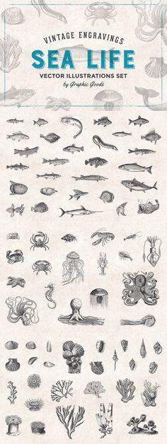Fishes & Sea Life Engravings Set