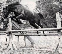 FADDAN 1935 bay stallion (*Fadl x *Bint Saada)