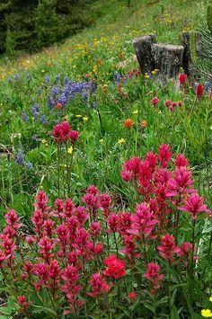 Title  Rocky Mountain Wildflowers - Fine Art By Lynn Bauer  Artist  Lynn Bauer  Medium  Photograph - Photography/digital Art