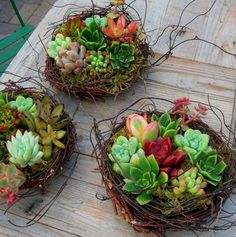 The sweetest, shabbiest of chic! Succulent birds nests * DIY decorating inspiration * handmade twig bird nest * Perfect favors or table markets for a wedding or a baby shower * hens & chicks * Easter Decor