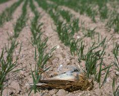 Es ist stumm geworden auf den Feldern. Das ist nicht nur ein Gefühl, sondern erschreckende Realität – wie neue Zahlen zum Vogelsterben zeigen Insects, Animals, Numbers, Animales, Animaux, Animal, Animais