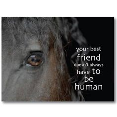 Doing a horse share with my friend?