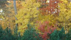 Fall in NC
