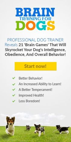 Increase your Dog's Intelligence, Obedience and overall Behavior through 21 Brain Games explained by Professional Dog Trainer. Increase your Dog's - Learning Ability - Improve Health - Better Behavior - Less Boredom Dog Training Courses, Brain Training Games, Dog Training Tips, Training Online, Brain Games, Agility Training, Training Videos, Dog Agility, Potty Training
