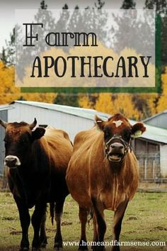 Farm Apothecary Guest Post