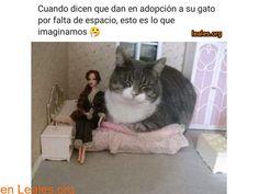 New meme compilation (cat memes,dog memes,pets memes,animal memes) Memes Humor, Funny Animal Memes, Cute Funny Animals, Funny Animal Pictures, Cute Baby Animals, Funny Cute, Cute Cats, Funny Memes, Jokes