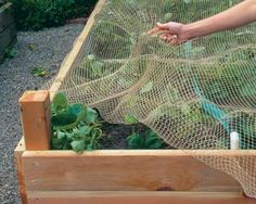 Bird Netting installation services in Bangalore and Mumbai. Hicare specializes in anti-bird netting services by Trained Experts. We offer Special HDPE net quality. Get high-quality anti-bird netting for your residential building. Metal Garden Beds, Elevated Garden Beds, Cedar Raised Garden Beds, Building Raised Garden Beds, Concrete Garden, Diy Garden, Garden Ideas, Edible Garden, Garden Projects