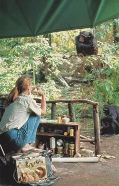 Jane Goodall is a world renowned primatologist, conservationist and animal rights activist who devoted her life to study chimpanzees in their natural Jane Goodall, Primates, Dian Fossey, A Well Traveled Woman, Wildlife Biologist, Mundo Animal, National Geographic, Photos, Pictures