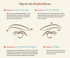 Learn brow terminology. | 16 Eyebrow Diagrams That Will Explain Everything To You