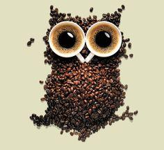 Coffee Owl O café da sabedoria / Wisdom coffe