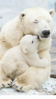 Gentle Polar Bear kisses. Enjoy RUSHWORLD boards, ZOO ZONE, AWE FACTOR MORE CUTE THAN YOU CAN HANDLE and LUXURY HOME DECOR AND PRACTICAL TREASURES. Follow RUSHWORLD on Pinterest! New content daily, always something you'll love!