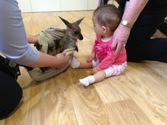 This orphaned joey meeting a teeny human baby. | 31 Pictures Of Baby Animals To Remind You The World Is Wonderful
