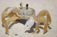 Crab on Old Carrabelle Beach Florida (Gulf Coast)