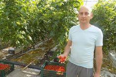 """""""Hrănirea"""" roșiilor este extrem de importantă având în vedere că acest pas duce la odezvoltare armonioasă a plantelor şi implicit la un rog bogat. În cazul hrănirii trebuie ştiut că, Solar, Organic, Gardening, Sculptures, Medical, Agriculture, Plant, Medical Doctor, Medicine"""