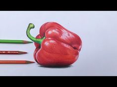 Drawing a bell pepper in colored pencils Horse Drawings, Realistic Drawings, Colorful Drawings, Art Drawings Sketches, Pencil Drawings, Drawing Techniques Pencil, Colored Pencil Techniques, Fine Art Drawing, Food Drawing