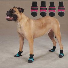 Guardian Gear Guardian Gear Brite Dog Boots XXLarge Raspberry >>> Want to know more, click on the image.