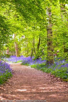 The magic of bluebells: exploring Arlington Bluebell Walk — Beautiful Simplicity Beautiful Forest, Beautiful Gardens, Beautiful Landscapes, Beautiful Images, Picture Places, Forest Path, British Countryside, Walking In Nature, Amazing Nature