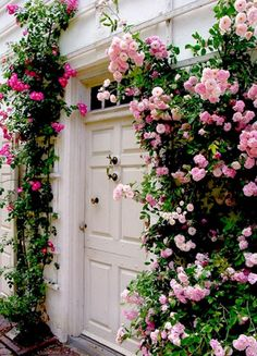 Beautiful climbing rose bushes growing up around a door.