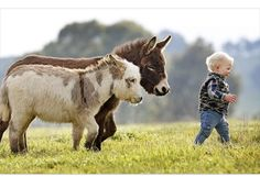 Cute photo of a baby being followed by miniature donkeys.