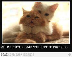 food, cats, funny