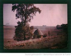 [Campagne en Picardie en été : arbre feuillu et meule de foin] : [photographie] / [non identifié] - 1910-1920