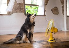 Animal photographer Illona Haus of Scruffy Dog Photography explores the surprising and humorous way dogs interact with fans in her series BLOW. Scruffy Dogs, Dog Milk, Photo Series, Cool Pets, Dog Photography, Beautiful Creatures, Cabins, Pup, Awesome
