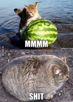 Funny fat cat - meme - http://jokideo.com/funny-fat-cat-meme/ - Tap the link now to see all of our cool cat collections!