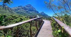 Did you know that the Centenary Tree Canopy Walkway, informally known as the Boomslang at Kirstenbosch Gardens, was built in to celebrate the centenary of Kirstenbosch in Tree Canopy, Walkway, Cape Town, Instagram Accounts, Your Image, South Africa, Cool Pictures, Sunshine, Gardens