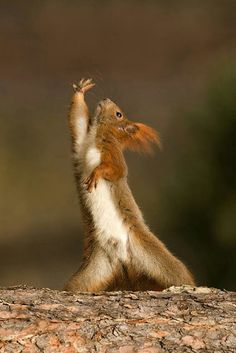 Tai chi squirrel Actually this reminds me of one of my favorite black belts!