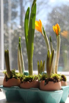 Forcing Bulbs in Eggshell Vessels, plant in late winter, and they sprout in time for Easter!