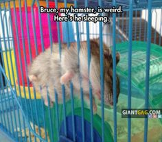 Images of the week, 71 images. My Hamster Is Weird, Here's He Sleeping